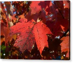 Acrylic Print featuring the photograph Maple Leaves In Autumn Red by MM Anderson