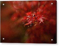 Maple Acrylic Print by Mel Brackstone