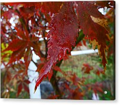 Maple Red Acrylic Print