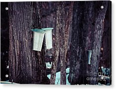 Maple Sap Acrylic Print by Cheryl Baxter