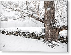 Acrylic Print featuring the photograph Maple Sugaring by Robert Clifford