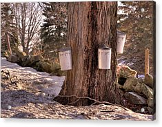 Maple Syrup Buckets Acrylic Print by Tom Singleton