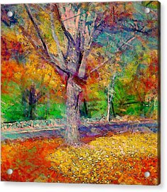 Maple Tree In Autumn - Square Acrylic Print