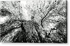 Acrylic Print featuring the photograph Maple Tree Inkblot by CML Brown