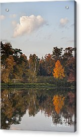 Maple Tree Reflection Acrylic Print