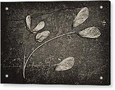 Maple Tree Whirlybirds Acrylic Print