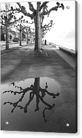 Acrylic Print featuring the photograph Maples Along Quai Perdonnet by Colleen Williams