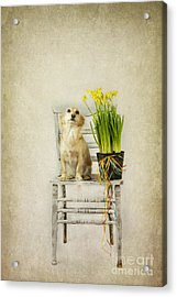 March Acrylic Print by Elena Nosyreva