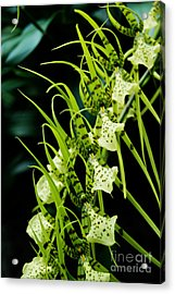 Acrylic Print featuring the photograph Marching Orchids by Eva Kaufman