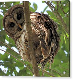 Acrylic Print featuring the photograph Marcus' Backyard Hooter by AnnaJo Vahle