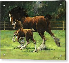 Clydesdale Mare And Colt Acrylic Print