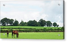 Mare And Foal Grazing In A Field In Acrylic Print