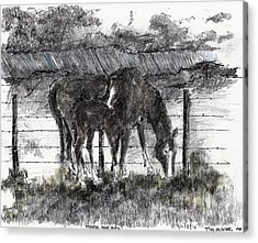 Acrylic Print featuring the mixed media Mare And Foal by Tim Oliver