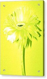 Margarita Zinnia Acrylic Print by Sherry Allen