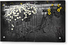 Marguerites And Bicycle Acrylic Print