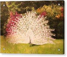 Maria's White Peacock Acrylic Print