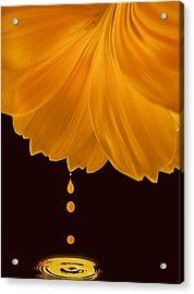 Marigold Factory Acrylic Print by Deborah Smith