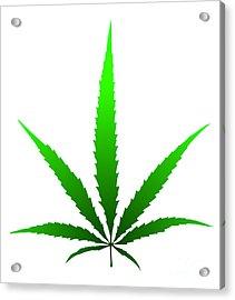 Marijuana Leaf Acrylic Print by Michal Boubin