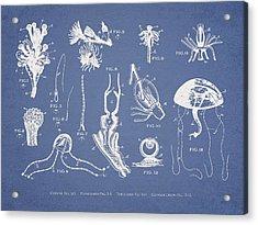 Marine Organisms Hydromedusae Acrylic Print by Aged Pixel