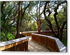 Maritime Forest Boardwalk Acrylic Print