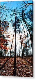Mark Twain Forest Acrylic Print