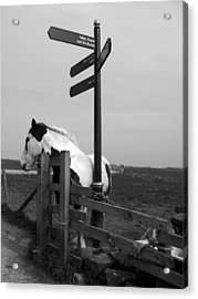 Acrylic Print featuring the photograph Marking The Way by Meaghan Troup