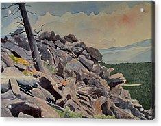 Marmot Hill Acrylic Print by Thomas Stratton