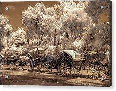 Marrakech Street Life - Horses Acrylic Print