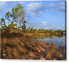 Marsh And Trees Saint George Isl Florida Acrylic Print by Tim Fitzharris