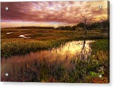 Marsh At Dawn Acrylic Print by Debra and Dave Vanderlaan