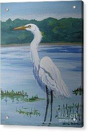Marsh Land Egret Acrylic Print