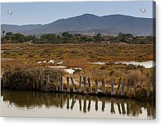 Marsh Acrylic Print by Paul Indigo