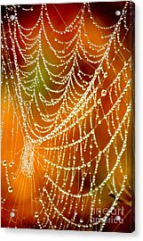 Marsh Pearls Acrylic Print by Carol Groenen