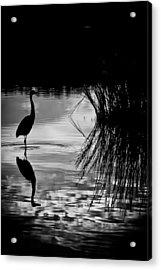 Marsh Reflection Acrylic Print