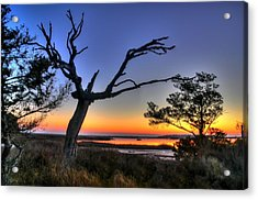 Marsh Tree Sunrise Acrylic Print