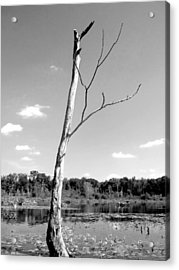 Marshland Tree In Black And White Acrylic Print