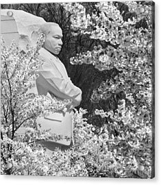 Martin Luther King Memorial Through The Blossoms Acrylic Print by Mike McGlothlen