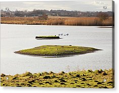 Martin Mere Bird Reserve Acrylic Print by Ashley Cooper