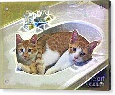 Mary's Cats Acrylic Print by Joan  Minchak