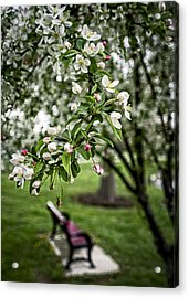 Mary's Tree And Bench Acrylic Print