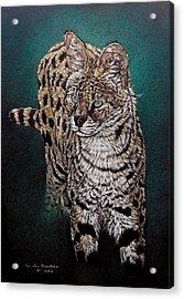 Masaai Acrylic Print