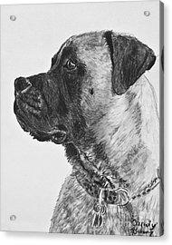 Mastiff In Profile Acrylic Print