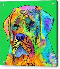 Mastiff Acrylic Print by Marlene Watson