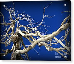 Material For A Witches Broom Acrylic Print