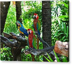 Mates Acrylic Print by Colleen Gerlach