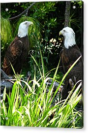 Acrylic Print featuring the photograph Mates by Greg Patzer