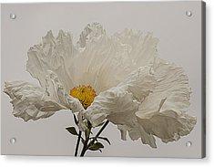 Matilija Poppy White On White Acrylic Print