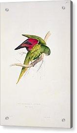Matons Parakeet Acrylic Print by Edward Lear