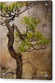 Matsu Acrylic Print by Eena Bo