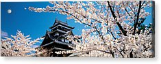 Matsue Castle Cherry Blossoms Shimane Acrylic Print by Panoramic Images